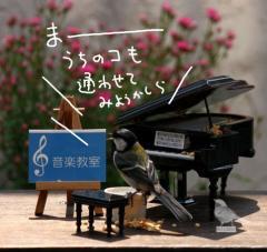 春海音楽教室